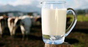 Tour du marché du lait Bio en Europe