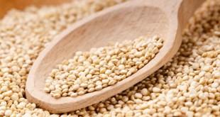 Le Pérou devient le premier producteur mondial de quinoa