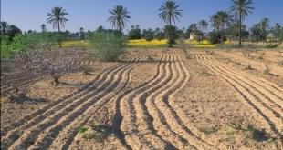 Tunisie: Les pertes agricoles du pays sont estimées à 1994 MDT