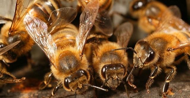 Pétition contre les pesticides tueurs d'abeilles
