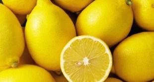 Afrique du Sud : Les exportations de citrons changent de destination