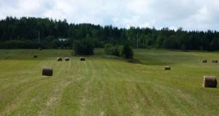 Québec s'inquiète des néonicotinoïdes