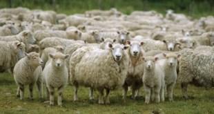 Meknès: élevage et gestion des catastrophes naturelles