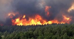 Incendie de 12 ha de végétation à Al Hoceima