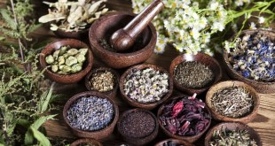 Plantes médicinales : Le Maroc a la 2e place mondiale