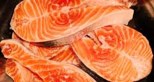 Un saumon génétiquement modifié autorisé aux USA