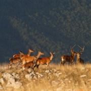 05-escursione-cervo-abruzzo (copia)