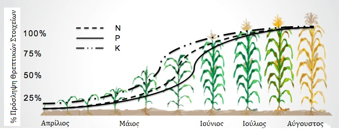 Corn-Nutrient-Availability-Chart