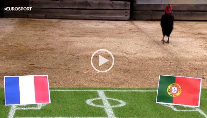 فيديو توقعات الطائر نيلسون مباراة النهائي يورو 2016