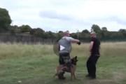 فيديو الكلب المدرب للقتال والحماية اختبار غير مسبوق مشاهدة ممتعة
