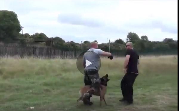 فيديو كلب بوليسي, اشرس كلب حماية, كلاب الهجوم, اقوى كلب مقاتل , كلاب الحماية والقتال , فيديو كلب قتال,فيديو الكلب المدرب للقتال والحماية ,اختبار للكلب غير مسبوق ,مشاهدة كلاب القتال, مشاهدة كلاب القتال
