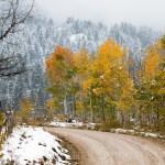 Snowliage