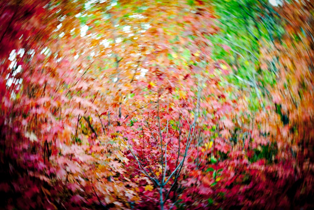 A colorful photograph of yellow, orange, and green Fall foliage in Park City, Utah