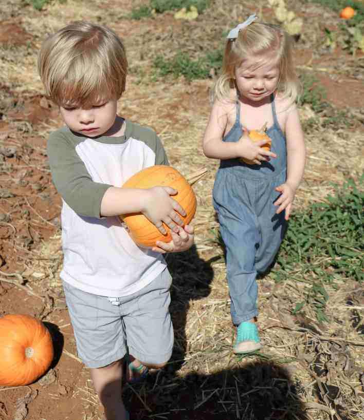 Pumpkin Patch 2016|Ahrens at Home
