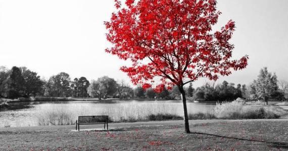 arbre paysage