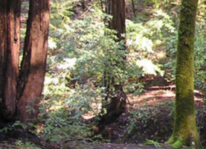 Natural beauty abounds in the Russian River region. Photo courtesy of parks.ca.gov