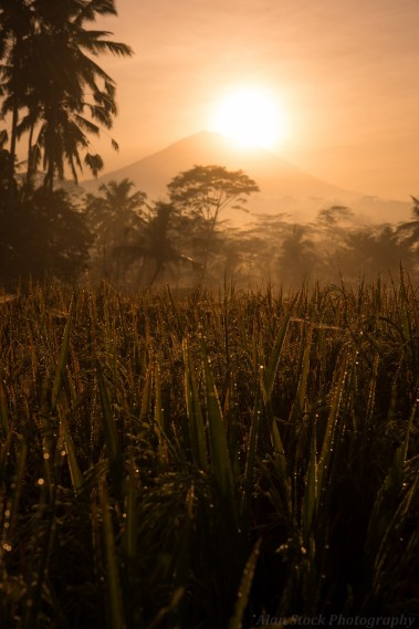 AlanStockPhotography-Bali-Photography-Workshop-Sunrise-Fields-Rice-David-Metcalf-Volcano-rays-03
