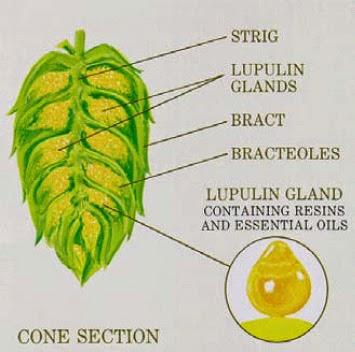 Credit: Buffalo Beer Biochemist