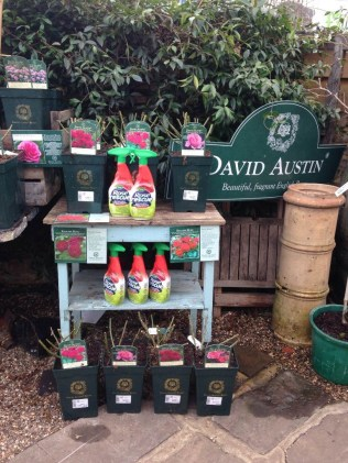 David Austin Roses & Rose rescue spray