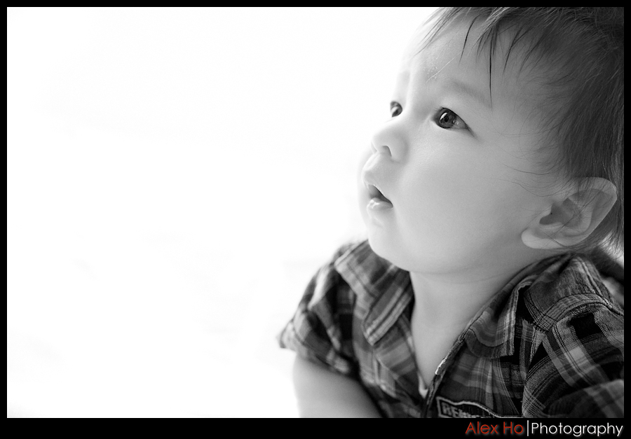 six month baby portraits Six Month Old Baby Portraits
