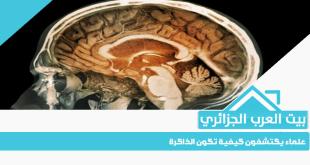 علماء يكتشفون كيفية تكون الذاكرة