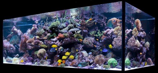 Aquarium Maintenance and Fish Care Information   Algone