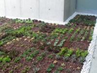 cubierta vegetal cubiertas vegetales techos verdes green roof temperaturas efecto isla de calor escorrentía vida natural