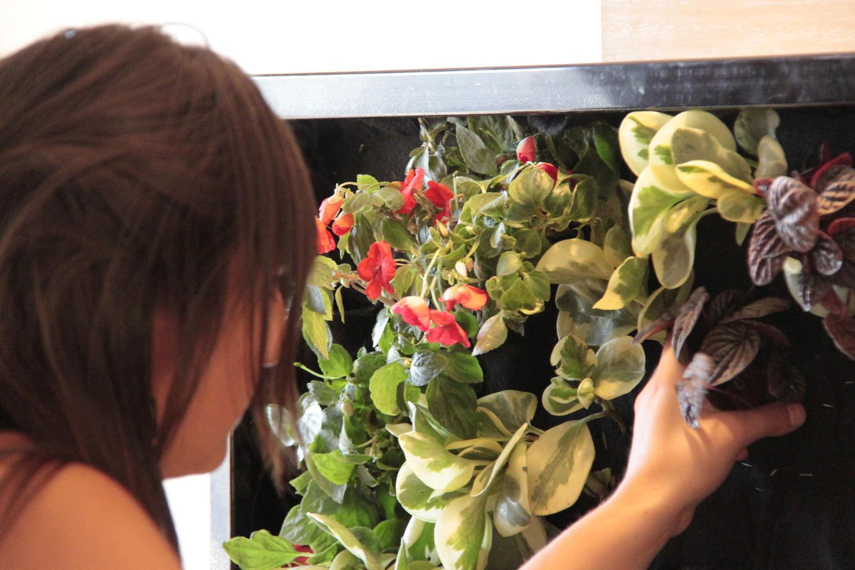 Curso de jardiner a vertical en madrid alicante forestal for Curso de jardineria