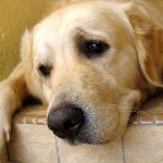 92246580-lost-dog-632x475