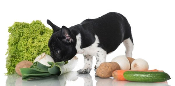 Human Foods Your Dog Can Eat
