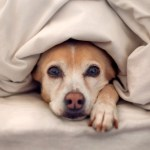 Should we let our dogs sleep in the bed?
