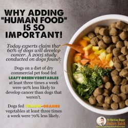 Small Crop Of Best Dog Food For Labs