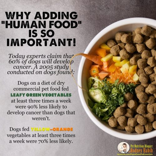 Medium Of Best Dog Food For Labs