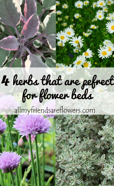 4 herbs that are pefrect for flower beds