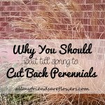 why you should wait till spring to cut back your perennials