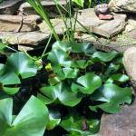 How many frogs can you spot in my pond? ribbithellip