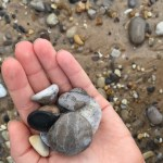Looking for Petoskey stones in the Leelenau Peninsula in Michiganhellip