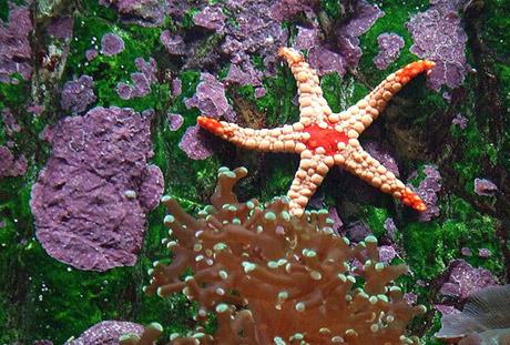 tropical freshwater aquarium fish species Car Pictures