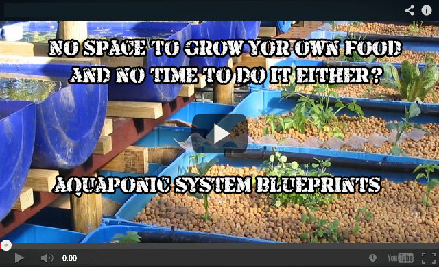 aquaponics2