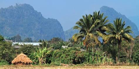 Berge und Palmen in Nordthailand