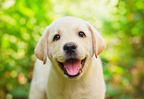 Abb. 5.102: Direkter Blick (inklusive eines Lächelns) (© Mila Atkovska/Shutterstock)
