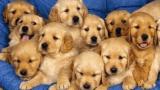 Detienen a 11 personas por vender ilegalmente mascotas en vía pública