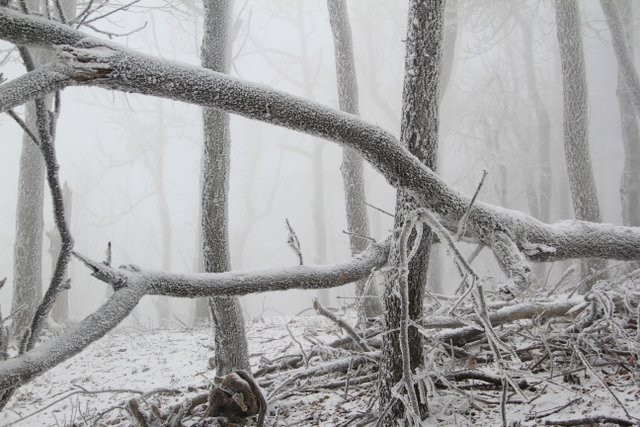 Winter in the Small Carpathians of Slovakia