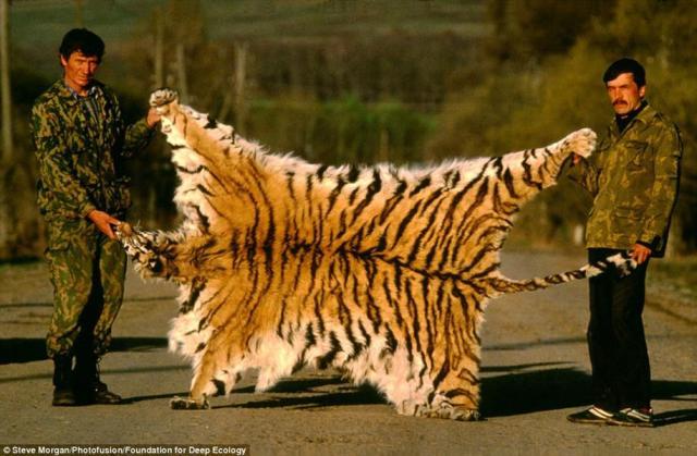 جلد نمر