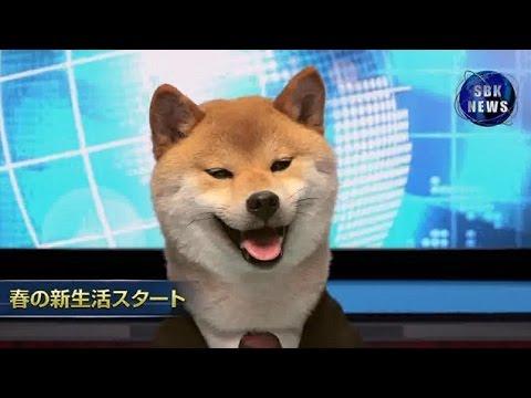 كلب يذيع نشرة الأخبار