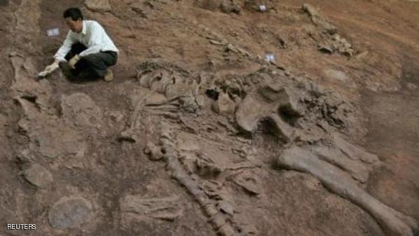 حفرية ديناصور اكتشفت في الصين - ارشيف رويترز