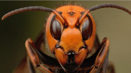 الحشرة القاتلة