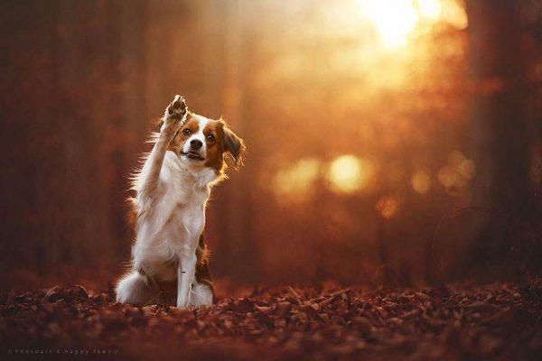 فنانة تلتقط صور مدهشة لكلاب تستمتع بفصل الخريف2
