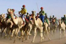 إنطلاق أول مهرجان للهجن العربى في السودان أكتوبر المقبل