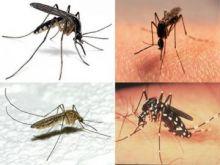 البعوض يجتاح ولاية الخرطوم والإصابة بالملاريا تتضاعف